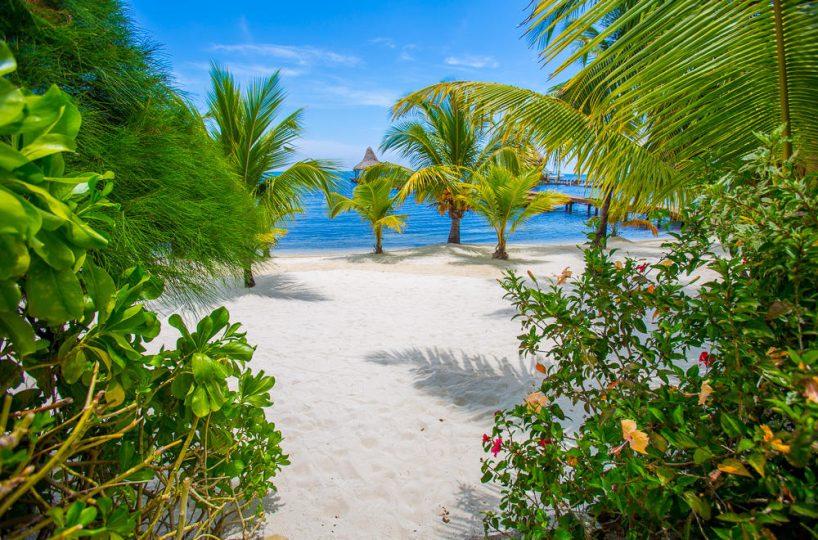 Soft sand beach and palm trees on Roatan island